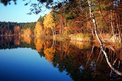 Colours of autumn (radimersky) Tags: autumn trees sunset lake reflection fall water lens landscape lumix colorful europa europe afternoon poland polska panasonic filter pancake 20mm colourful capture leafs woda podzim zachd soca jesie filtr polarizing jezioro krajina jezero popoudnie licie gf1 odbicie kolorowe drzewa krajobraz turawa polaryzacyjny turawskie dmcgf1