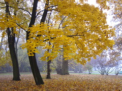 Autumn (ela_s) Tags: autumn canon kraków cracow s90 jesień parkjordana photographymypassion salonpolski