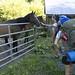 08-17-11: Unfriendly Horses