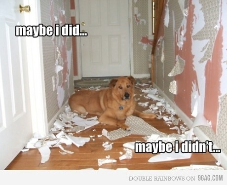 dog walls