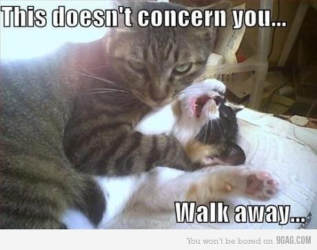 cats bully