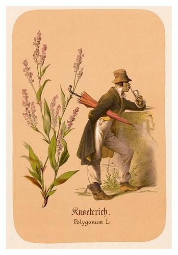 010-Mala hierba-Illustrirtes Kräuterbuch –Aquarelle- 1870-Adolf Schroedter