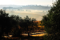 Chianti morning (neimon2 (too busy, sorry for my temporary silence)) Tags: morning trees italy mist vineyard olive vine hills vineyards tuscany chianti firenze siena arezzo sanleonino castellinainchianti neimon2