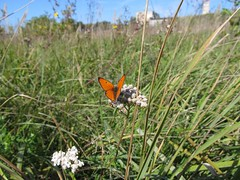 Brighter, than the orange! (halina.reshetova) Tags: flowers autumn orange plants nature butterflies insects hennysgardens