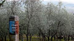 Dead End, Chianti. Rignana P1130880 (mansionmedia simon knight) Tags: italy italia tuscany chianti toscana rignana simonknight mansionmedia