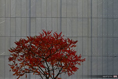 red_and_gray (alamond) Tags: city autumn red canon gray 7d marble urbanspace llens ef70300mmf456lisusm