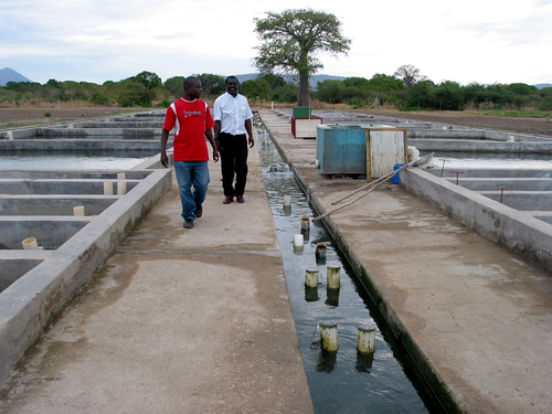 Hatchery, Malawi. Photo by Diemuth Elisabeth Pemsl, 2008