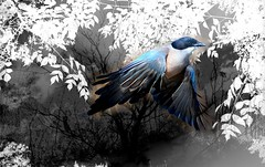 Oyendo la voz del pájaro, todo viento me abandona al azar de tu interior, buscando cobijo en tu palabra y en el beso exhausto... (conejo721*) Tags: argentina hojas árboles amor texturas palabras mardelplata pájaro poesía poema sentimientos conejo721