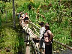 Trekking: crossing the bamboo bridge (ashramgandhi) Tags: yoga candidasa retreats 2011 ashramgandhicom