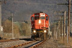 Western New York & Pennsylvania Railroad (Cooks Forest) Tags: cartier driftwood alco dft cp4500 canadianpacificrailway me16 canadiannationalrailways newyorksusquehannawestern am70 pc2054 arkansasandmissourirailroad wnypa portalleganypa westernnewyorkpennsylvaniarailroad cn2300 alcom636 quebeccartiermining cn2312 wnyparr alcomlwc630 wnyparr432 alcocentury430 canadianpacificrailway4500 arkansasandmissourirailroad70 alco630 wnypa630 nysw3668 qcm41 rrpowerleasingllc sixx41 636leasing wnyparr637 canadiannationalrailways2312 cartier47 qcm47 quebeccartiermining47 newyorksusquehannawestern3668 cartier41 quebeccartiermining41 rrpx41 wnyparr41 canadiannationalrailways2300 nyc2054 newyorkcentral2054 penncentralpc2054 cr2054 conrail2054 morristownerie16