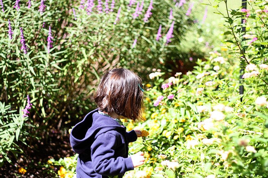 sloaney picking flowers