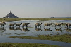 France - Normandie - Mont Saint-Michel (Thierry B) Tags: sea mer france animal architecture geotagged photography frankreich europa europe exterior photos outdoor dr frana normandie sanmiguel monuments reflexions geotag fr normandy extrieur reflets religions manche westerneurope montsaintmichel  baiedumontsaintmichel abbaye faune geolocation photographies 2011  catholique bassenormandie pontorson  horizontales europedelouest  patrimoinemondial  catholiques    chrtiens abbayedumontsaintmichel gotagg thierrybeauvir beauvir lesensdusacr wwwbeauvircom droitsrservs  leuropepittoresque photothierrybeauvir 20110929 communautdecommunesdepontorson 2011en21images