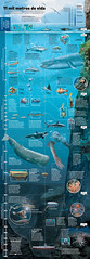 Mundo Mar (Gabriel Gianordoli) Tags: sea fish magazine design editorial infographic