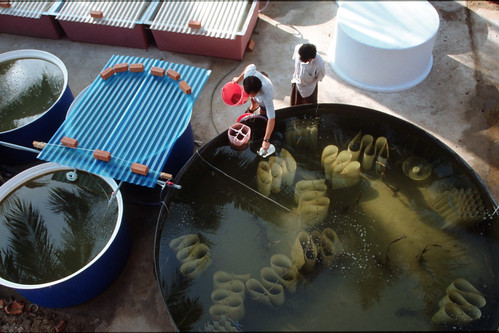 Hatchery, Rayner Nha Trang, Vietnam. Photo by Dominyk Lever, 2004