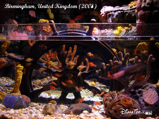 Birmingham Sea Life 15