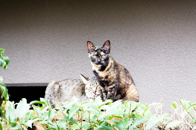 Today's Cat@2011-10-16