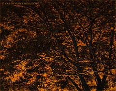 Locust Abstract (KvonK) Tags: black tree fall yellow creative montage locust leafcarpet