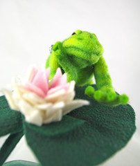 Frog & Lily Pad 9
