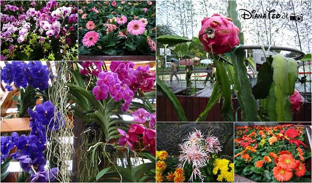 Taipei Flora Expo 16