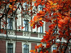 Red Oak (titkova) Tags: city autumn windows red fall leaves yellow oak