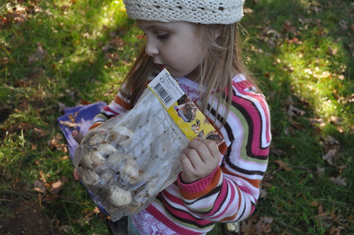 a children's garden :: planting bulbs