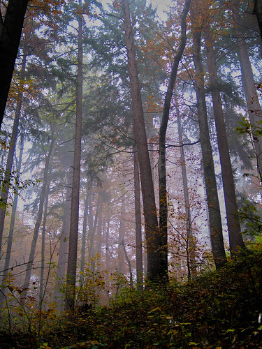 German Foggy Forest