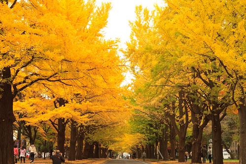 秋色に染まる銀杏並木