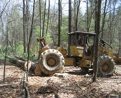 Removing mature trees while minimizing damage to residuals.