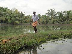 DSC03634 (Mathieu Castel) Tags: india fish island farming kerala canoe monroe backwaters