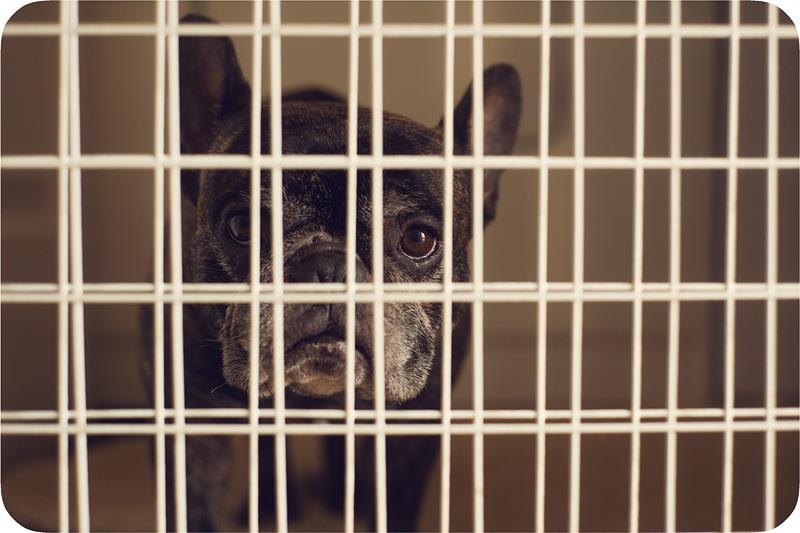 Sannie Jail