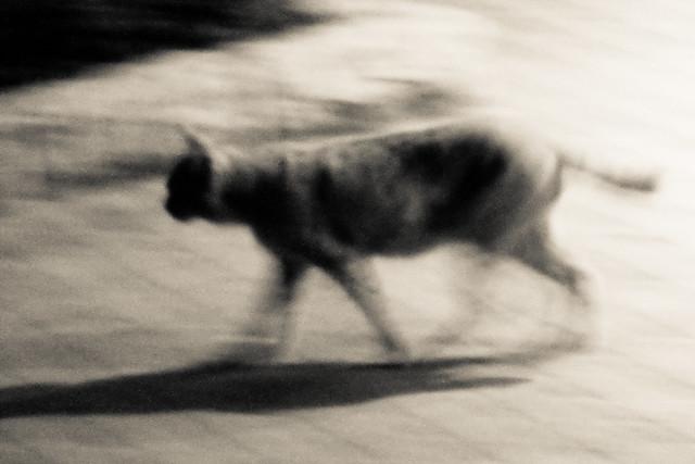 Today's Cat@2011-11-01