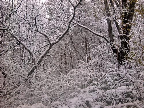 Unseasonal Fall Snow