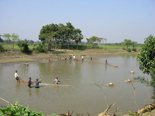 Fish harvest in progress, Bangladesh. Photo by WorldFish, 2005