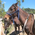 """Terra Khaya Horses <a style=""""margin-left:10px; font-size:0.8em;"""" href=""""http://www.flickr.com/photos/14315427@N00/6313098500/"""" target=""""_blank"""">@flickr</a>"""