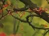 Autumn 2011 (wemale) Tags: autumn sigma olympus adapter 43 43adapter omlenses sigmaforom rumariuw