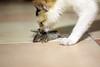 Finally! (sgrah) Tags: cat rat pest hunt