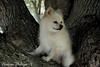 DSC_0731 2 (zoo2292) Tags: bear dog puppy doggy pomeranian pompom