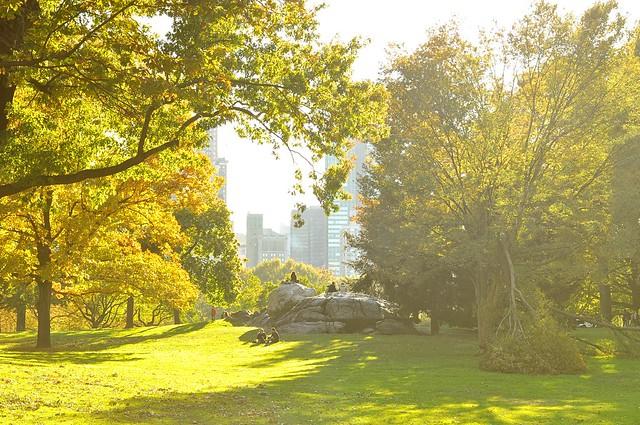 Central Park sun