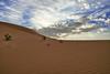 The Desert (TARIQ-M) Tags: sky cloud texture landscape sand waves desert dunes riyadh saudiarabia بر الصحراء canonefs1855 الرياض سماء غيوم صحراء رمال سحب رمل طعس كانون المملكةالعربيةالسعودية canon400d الرمل خطوط صحاري نفود الرمال كثبان براري تموجات تموج نفد