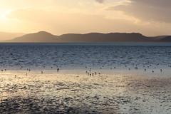 Moray Firth (DJMS Photos) Tags: fortgeorge morayfirth ardersier