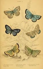 6butterflies
