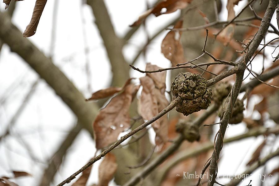 poop-tree