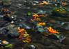 Watercolors - Serpentine River - Tynehead Regional Park in Surrey (janusz l) Tags: park colour fall water colors leaves river stream long exposure surrey foliage exposition automn hdr regional serpentine janusz tynehead leszczynski 222322