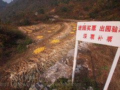 Corn field (Phil Walker Photo) Tags: china yellow rural corn asia village farm farming chinese harvest remote sweetcorn jiankou