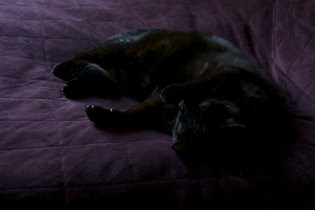 black cat purple bed IV