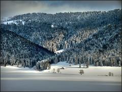 Swiss winter time 2008 in the Jura Mountains : La Sagne. 1000 m alt.( Canton of Neuchâtel Near La Chaux-de-Fonds). no.8934 (Izakigur) Tags: chauxdefonds izakigur iphoto flickr europe romandie suisse suisseromande schweiz svizzera nikon picnik lasagne europa jura liberté winter lesamisdupetitprince isviçre 명사 svislando suïssa suizo suiza romande 스위스 lachauxdefonds 瑞士 neuchatel ch ne nech nc paysdeneuchâtel neuenburg swiss lac mywinners nikoncoolpixp5100 coolpix nikoncoolpix imagesforthelittleprince lepetitprince myswitzerland izakigurneuchâtel neuchâtel lasuisse dieschweiz feel suisia mygearandme cantonofneuchatel switzerland cantondeneuchâtel izakigur2008 helvetia coolpixp5100 izakigurjura 500faves topf25 topf800