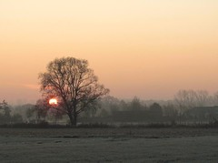 soft sunrise (Foto Dominic) Tags: cold tree nature fog sunrise frozen nevel bomen soft natuur zonsopgang zacht vrieskou herselt flickbronzeaward doubleniceshot tripleniceshot mygearandme mygearandmepremium mygearandmebronze mygearandmesilver mygearandmegold mygearandmeplatinum fotodominic