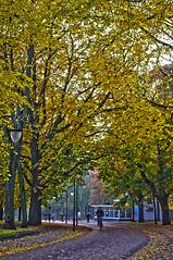 Herfst in het Noorderplantsoen (King Haan) Tags: trees holland tree netherlands leaf bomen pentax boom kr groningen leafs noorderplantsoen bladeren plantsoen neerland justpentax pentaxart onlypentax mygearandme