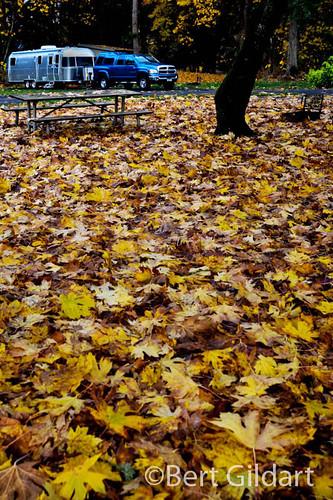 Fall-Eugene-5