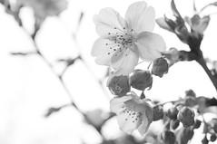 R0016033.jpg (Tetsuo Nakamura) Tags: monochrome 2012